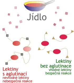 Lectin diagram